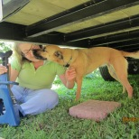 Clover helping me set the jacks under the trailer. It should be noted the jack in the picture was the jack that I had to return. The stabilizing jacks that I ended up buying are different.